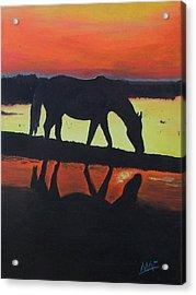 Horse Shadows Acrylic Print by Mark Fluharty