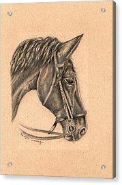 Horse Sketch Acrylic Print