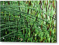 Acrylic Print featuring the photograph Horse Tail Zen Garden by Haleh Mahbod