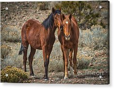 Horse Whispers Acrylic Print