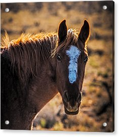 Horse With Backlight Acrylic Print