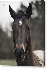 Horse With Gentle Eyes Acrylic Print