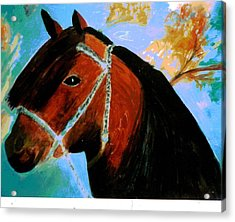 Horse With Long Forelocks Acrylic Print by Anne-Elizabeth Whiteway