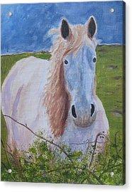 Horse With Stormy Skies Acrylic Print by Dawn Dreibus