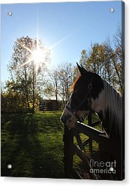 Horse With Sunburst Acrylic Print
