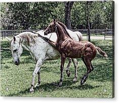 Horse Yoga Acrylic Print