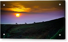 Horsed On The Purple Hillside Acrylic Print by William Shevchuk