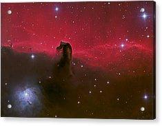 Horsehead Nebula Acrylic Print by Brian Peterson