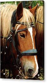Horsehead Acrylic Print by Susan Crossman Buscho