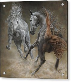 Horseplay II Acrylic Print by Wayne Pruse