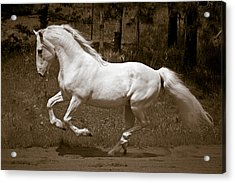 Acrylic Print featuring the photograph Horsepower D5779 by Wes and Dotty Weber