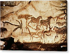 Horses And Deer From The Caves At Altamira, 15000 Bc Cave Painting Acrylic Print by Prehistoric