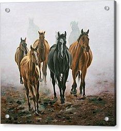 Horses And Dust Acrylic Print by Jason Marsh