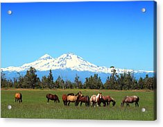 Horses At Sisters Mountain Acrylic Print