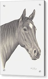 Acrylic Print featuring the drawing Horses Beauty by Patricia Hiltz