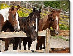 Horses Behind A Fence Acrylic Print