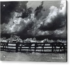 Horses Black And White Infrared Stormy Sky Nature Landscape Acrylic Print by Kathy Fornal