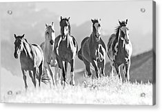 Horses Crest The Hill Acrylic Print by Carol Walker