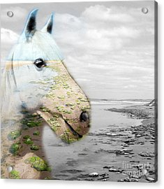 Horses Dream Acrylic Print by Jo Collins