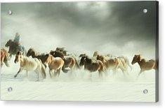 Horses Gallop Acrylic Print