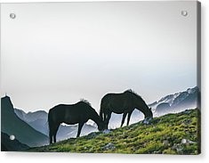Horses Grazing, Dolomites Acrylic Print