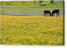 Horses Grazing In Field Acrylic Print