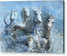 Horses Having Fun Acrylic Print by Theo Brush