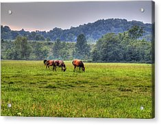 Horses In A Field 2 Acrylic Print
