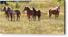 Acrylic Print featuring the photograph Horses In A Field by Susan Crossman Buscho