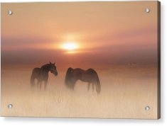 Horses In A Misty Dawn Acrylic Print