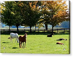 Horses In Fall Acrylic Print