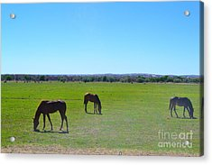 Acrylic Print featuring the photograph Horses In New Mexico by Utopia Concepts