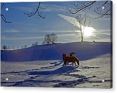 Horses In Snow Acrylic Print by Greg Reed