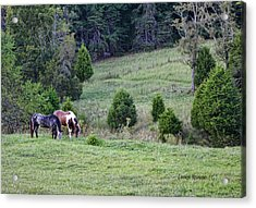 Horses In Summer Acrylic Print