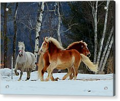 Acrylic Print featuring the photograph Horses In The Snow by Elaine Franklin