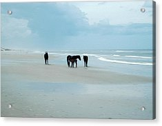 Horses Of The Obx Acrylic Print