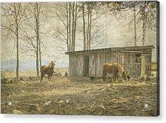 Horses On The Farm Acrylic Print