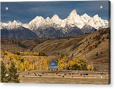 Horses On The Gros Ventre River Acrylic Print