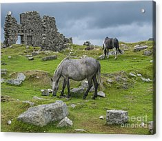 Horses On The Moors Of Dartmoor Acrylic Print