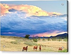 Horses On The Storm 2 Acrylic Print by James BO  Insogna