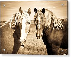 Horses  Acrylic Print by Paulina Szajek