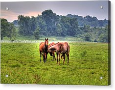 Acrylic Print featuring the photograph Horses Socialize by Jonny D