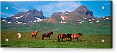Horses Standing And Grazing In A Acrylic Print