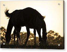 Horses Sunset Acrylic Print by Michael Mogensen