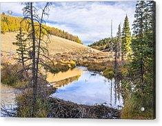 Horsethief Creek Beaver Pond - Cripple Creek Colorado Acrylic Print by Brian Harig