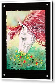 Horsin Around Number Six Acrylic Print by David  Chapple