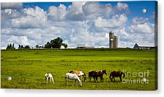 Acrylic Print featuring the photograph Horsing Around  by Ricky L Jones