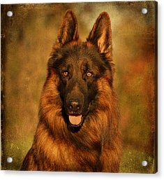 Hoss - German Shepherd Dog Acrylic Print by Sandy Keeton