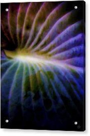 Hosta Leaf Acrylic Print by Matt Lindley