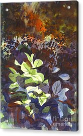 Hostas In The Forest Acrylic Print by Kip DeVore
